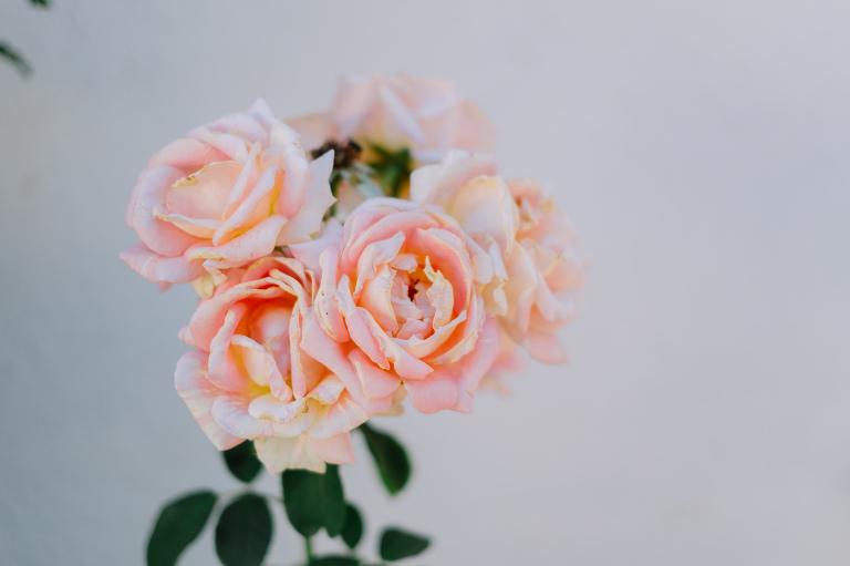 cincsor nunta 6