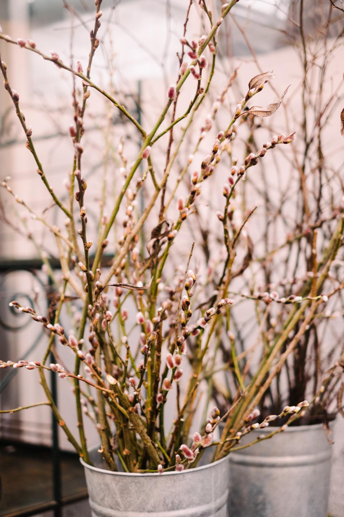 sweden_deersphotography-1022