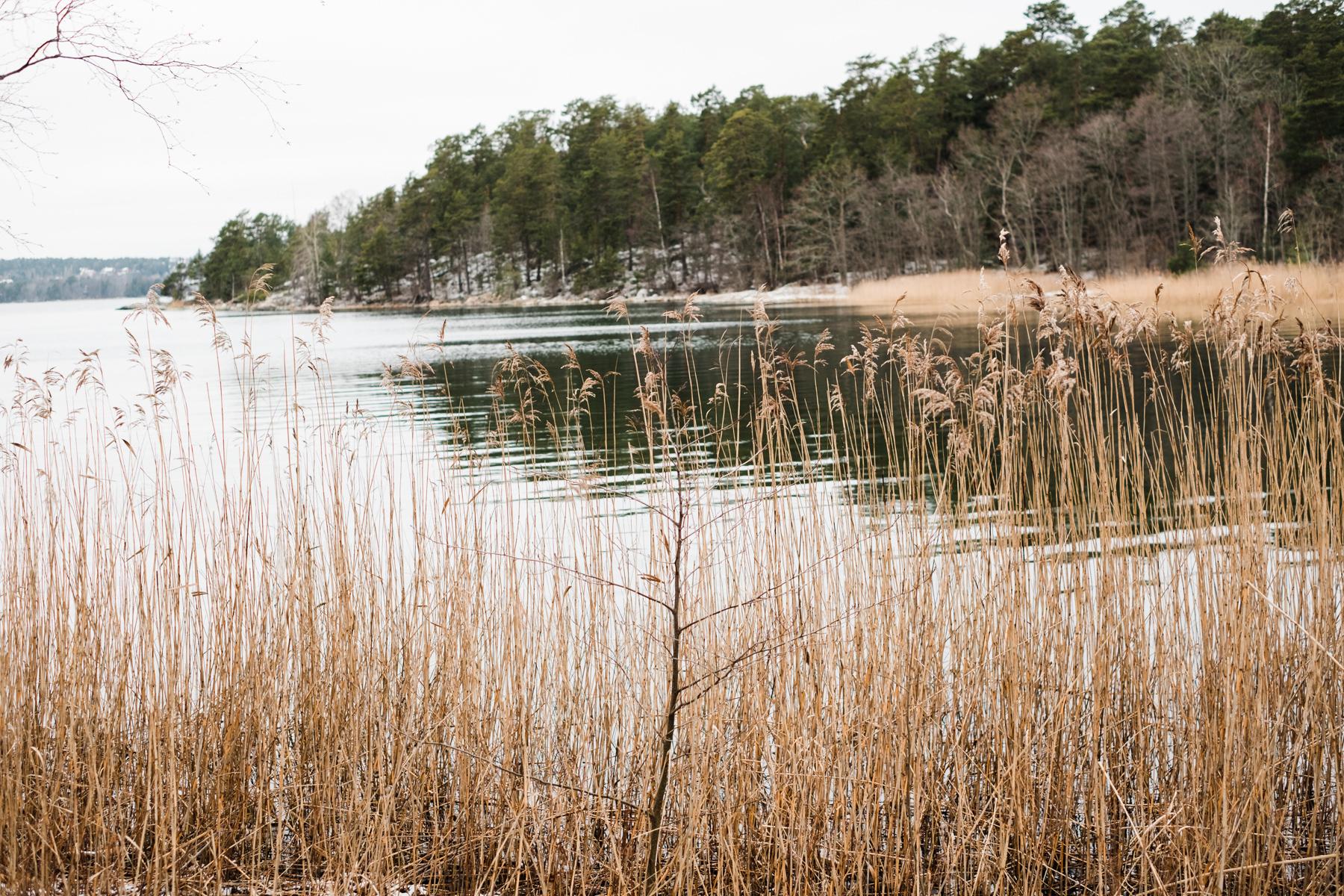 sweden_deersphotography-1086