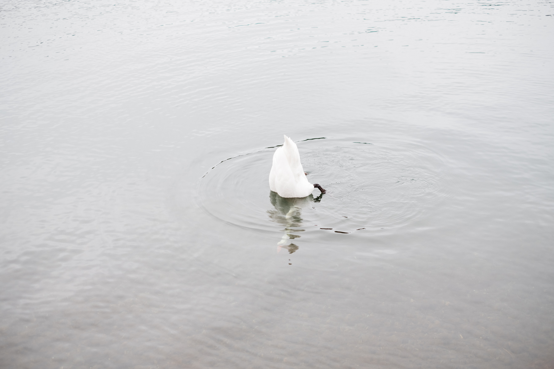 sweden_deersphotography-1087