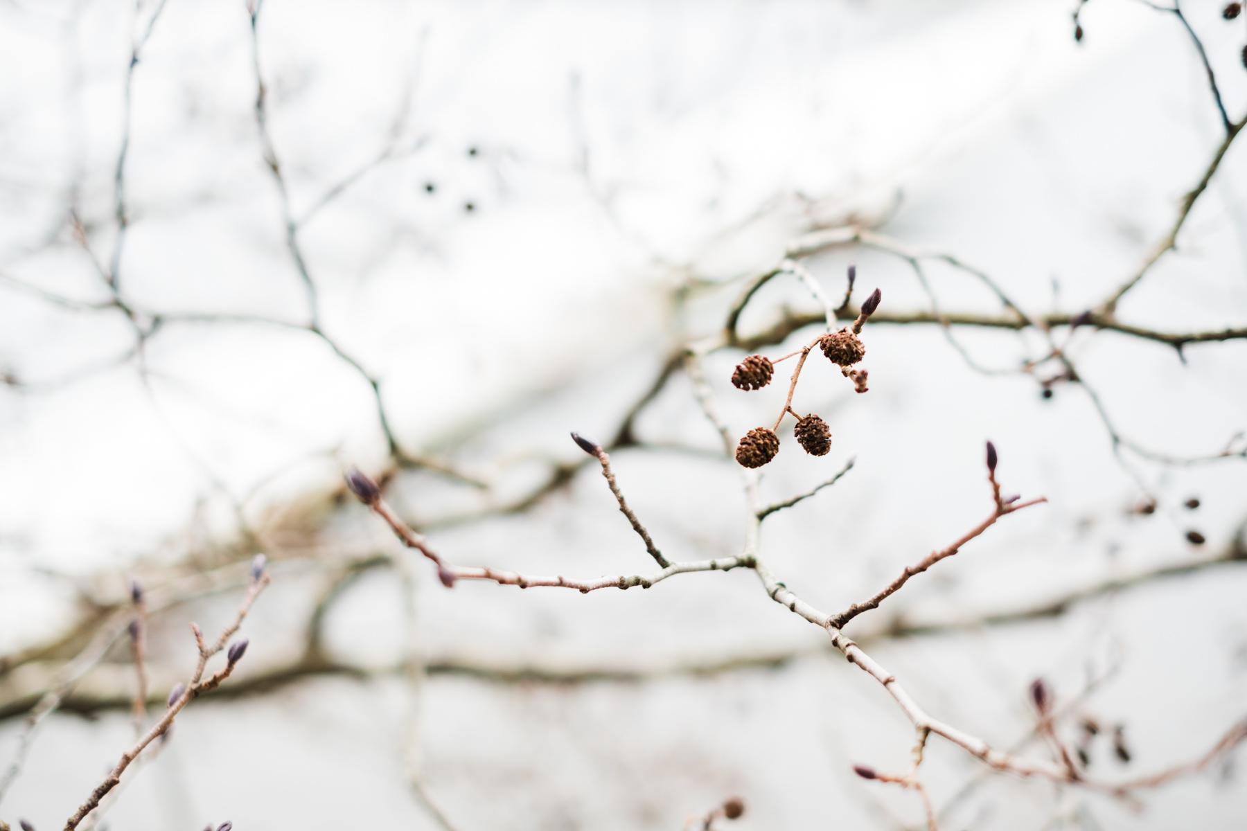 sweden_deersphotography-1089