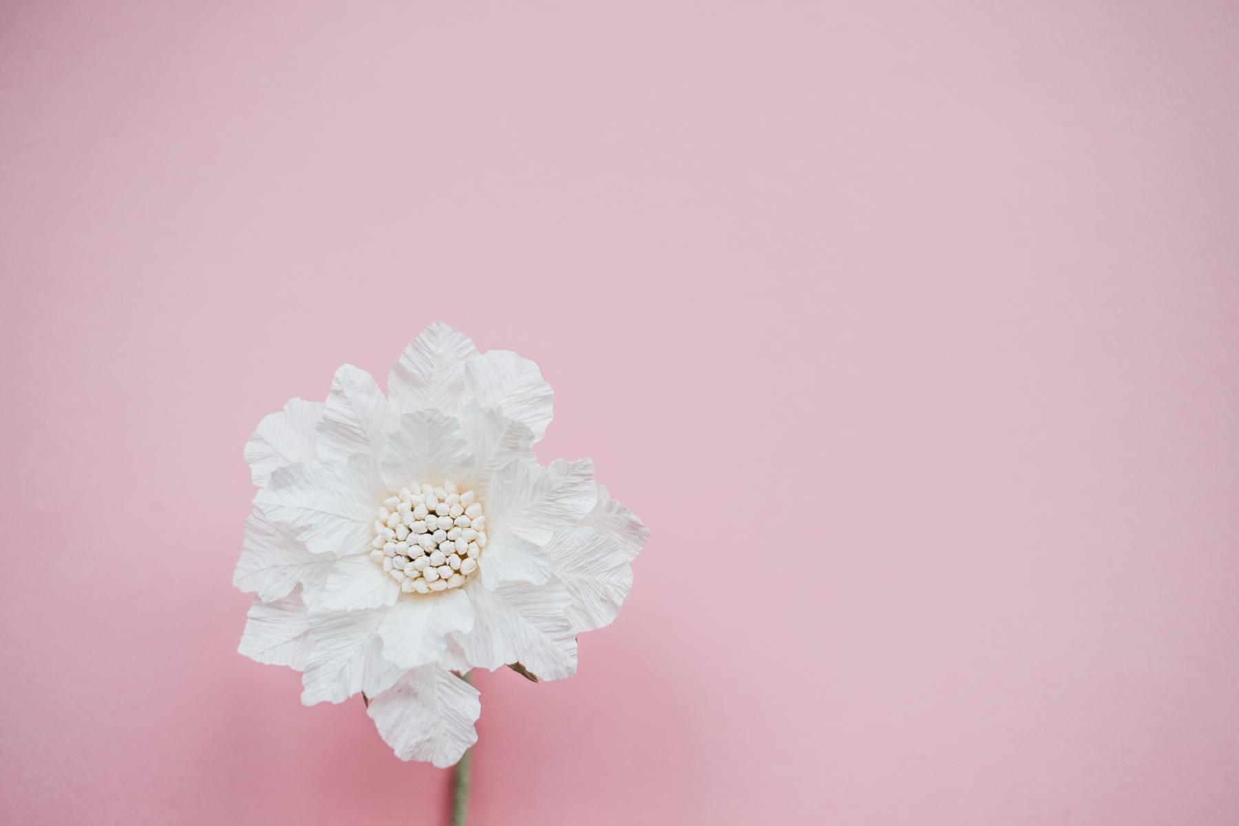 paper flowers_ deersphotography-197