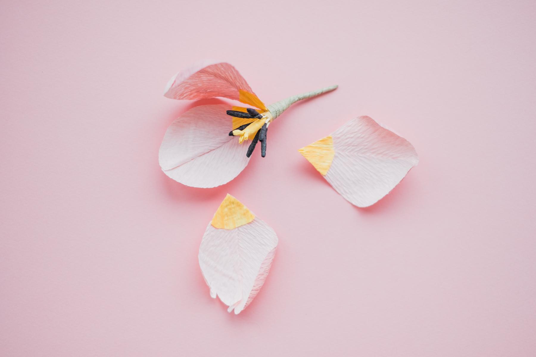 paper flowers_ deersphotography-201