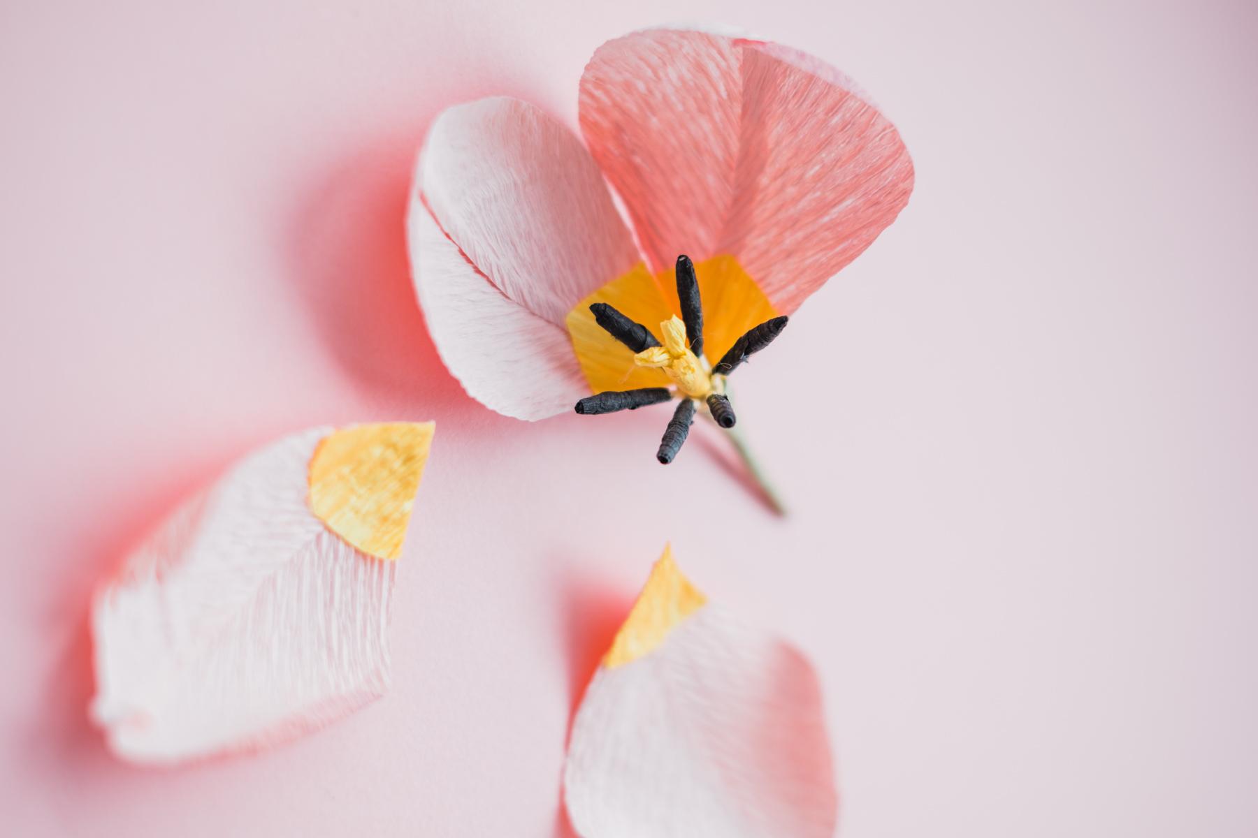 paper flowers_ deersphotography-202