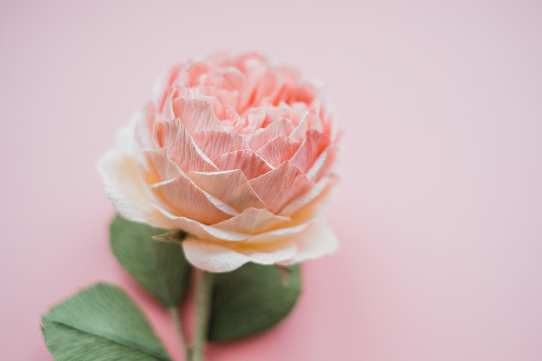 paper flowers_ deersphotography-204
