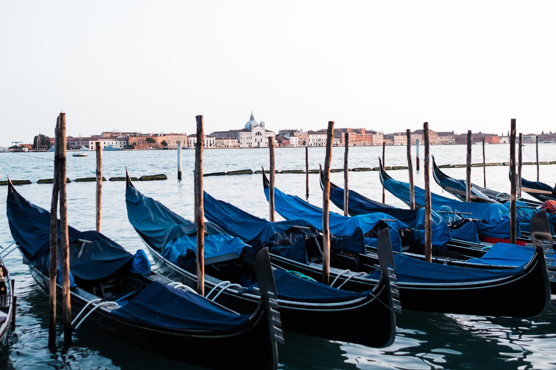 Venice_deersphotography-125