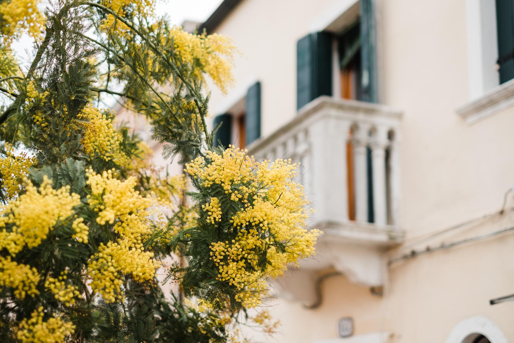 Venice_deersphotography-188