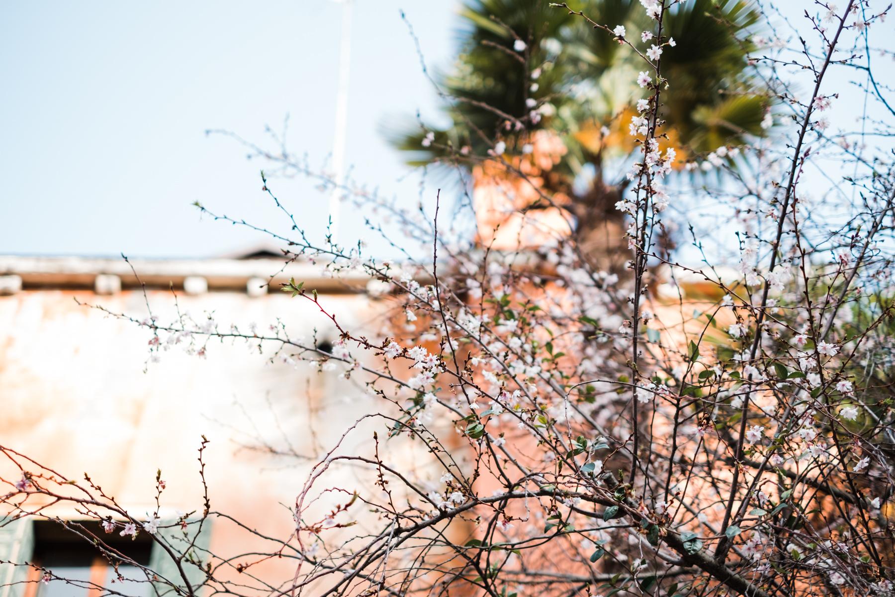 Venice_deersphotography-2