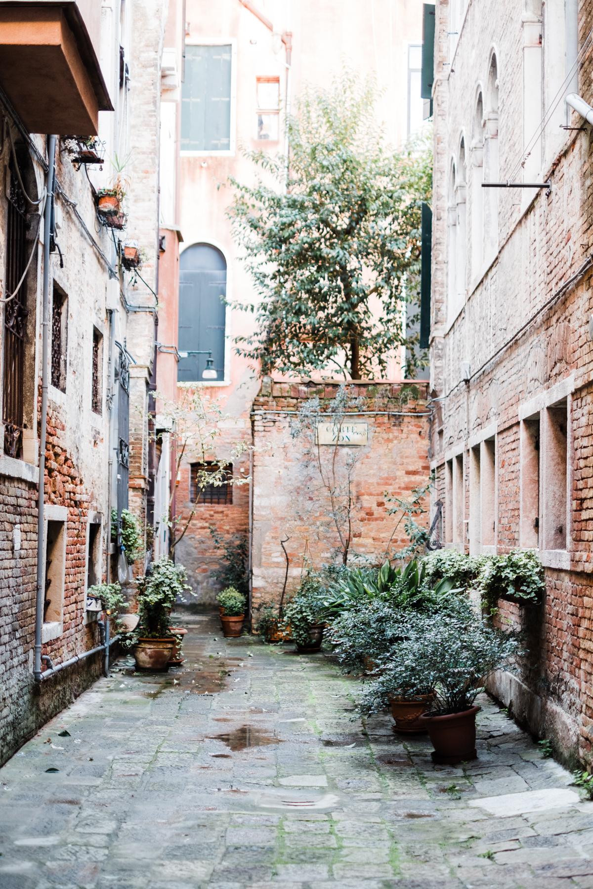 Venice_deersphotography-297